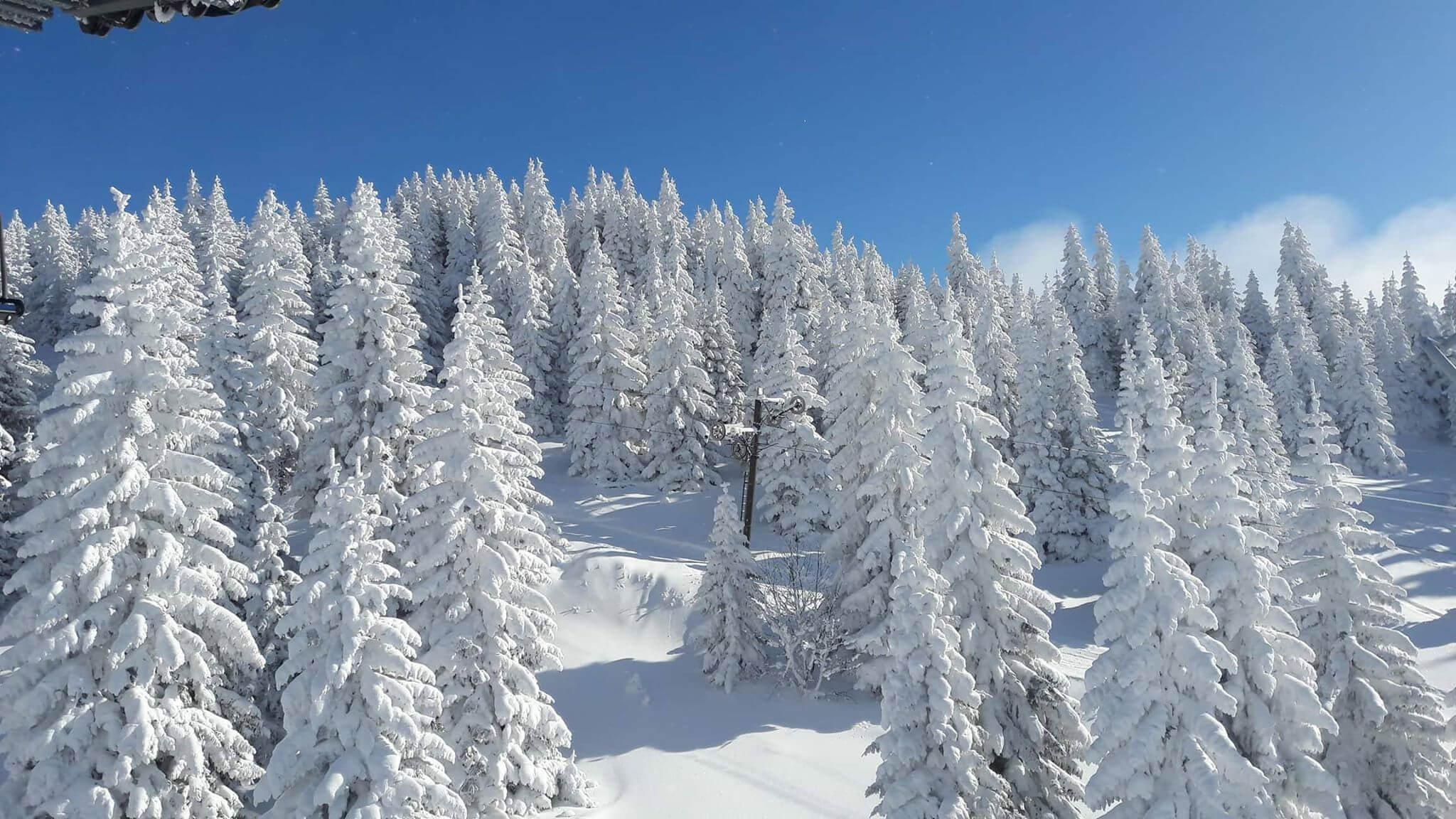Snežna idila na Kopaoniku (5) - 21. decembar 2017