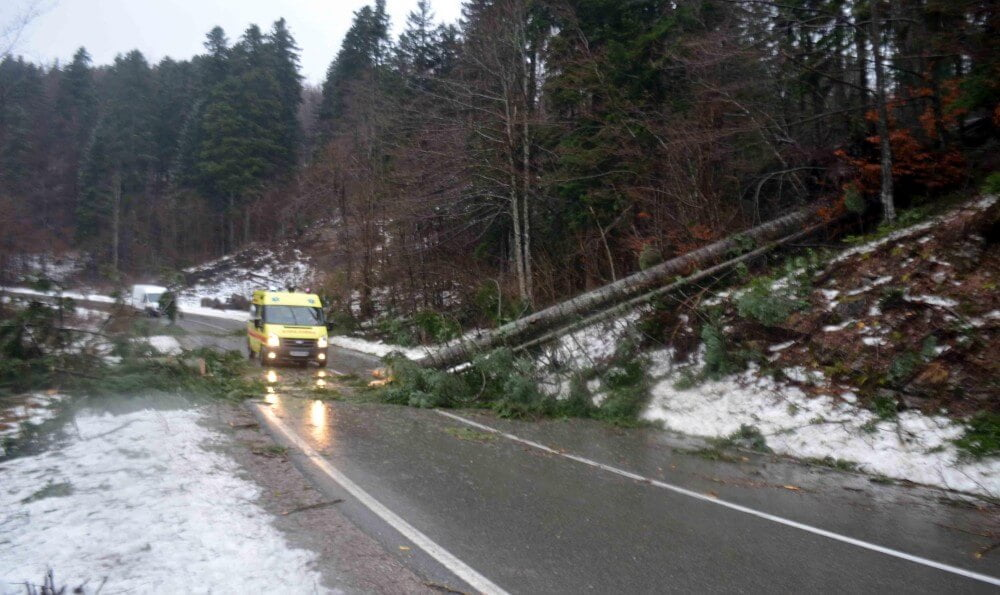 Stabla na putu Gorski kotar (foto: M. KRMPOTIĆ / Novi List)