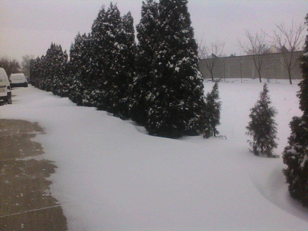 Sneg u Staroj Pazovi - 27. feb ujutru