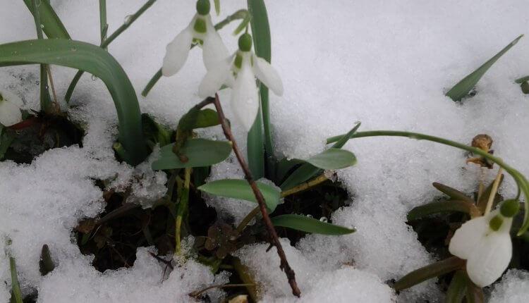 Visibabe pod snegom - februar 2018