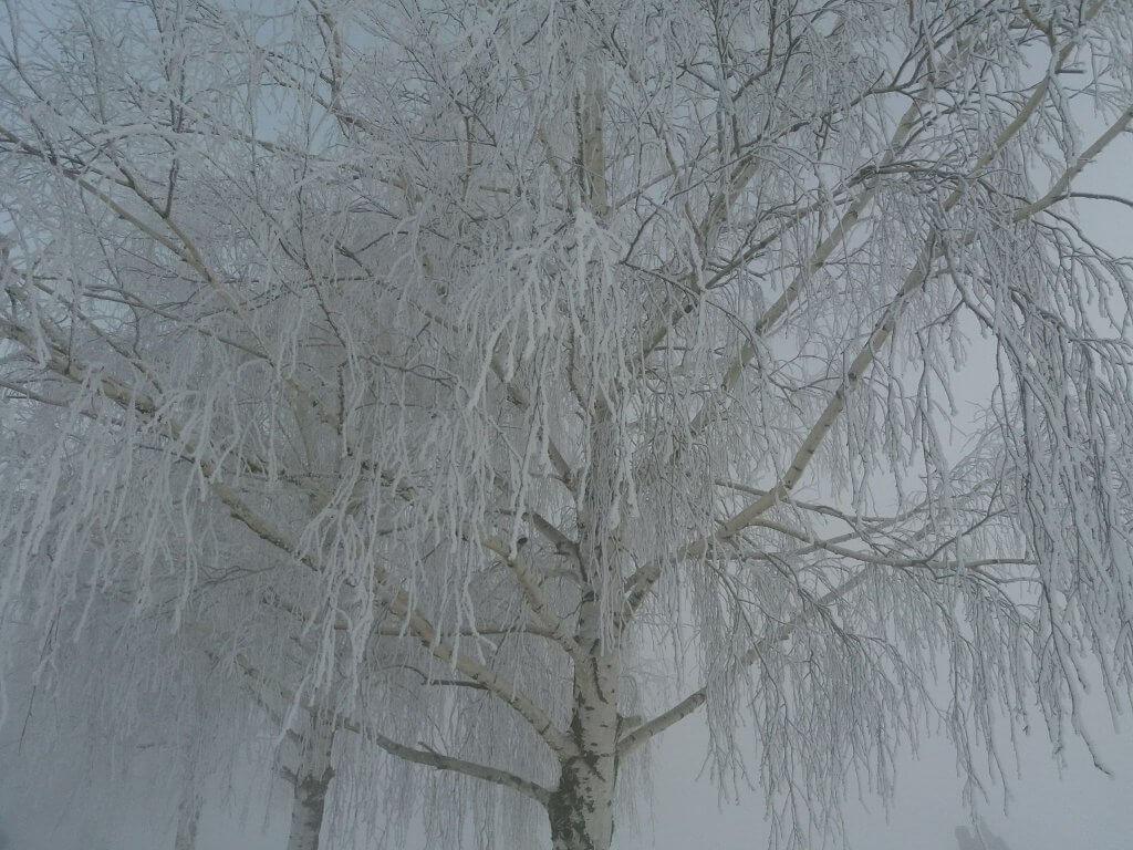 Ledena magla u Zrenjaninu (2) - 1. mart 2018