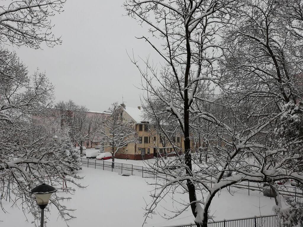 Novi Sad ispod 20cm snega (2)