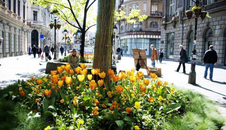 Lale u Beogradu (Izvor: flickr.com)