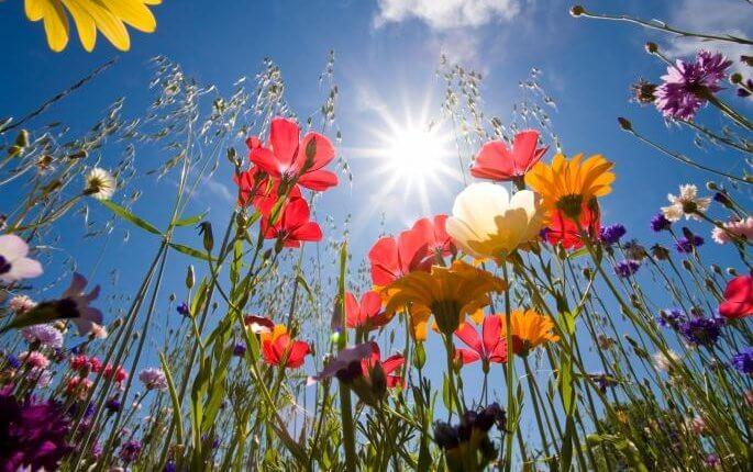 Proleće cveće sunce
