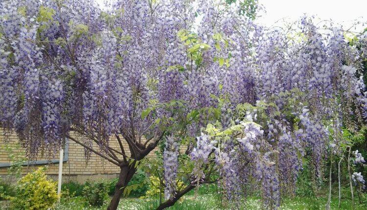 Proleće u punom zamahu