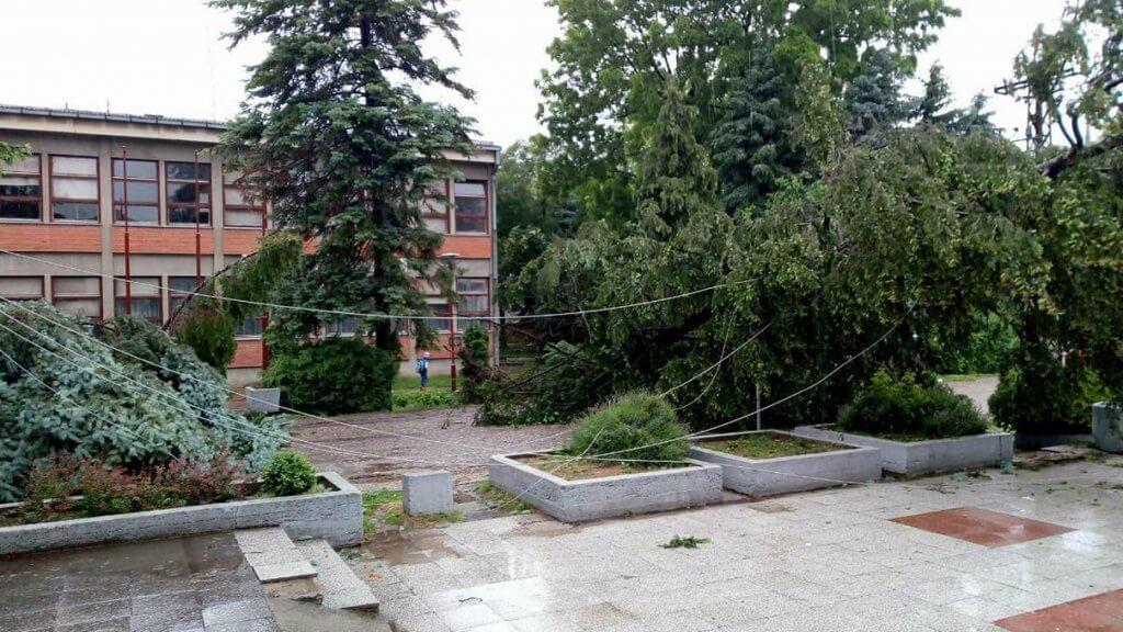 Olujni vetar obarao stabla - Deliblato 16. maj