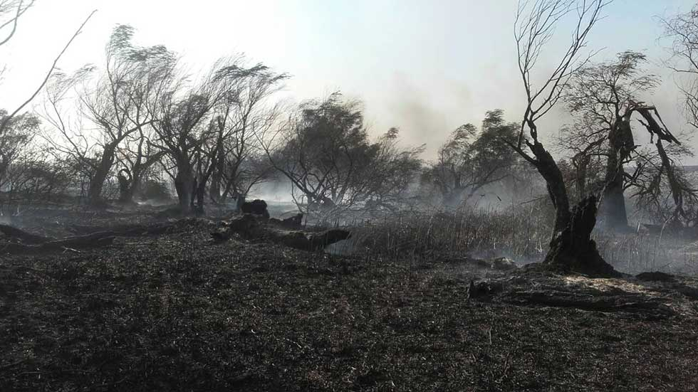 Jučerašnji požar na Carskoj Bari (2)