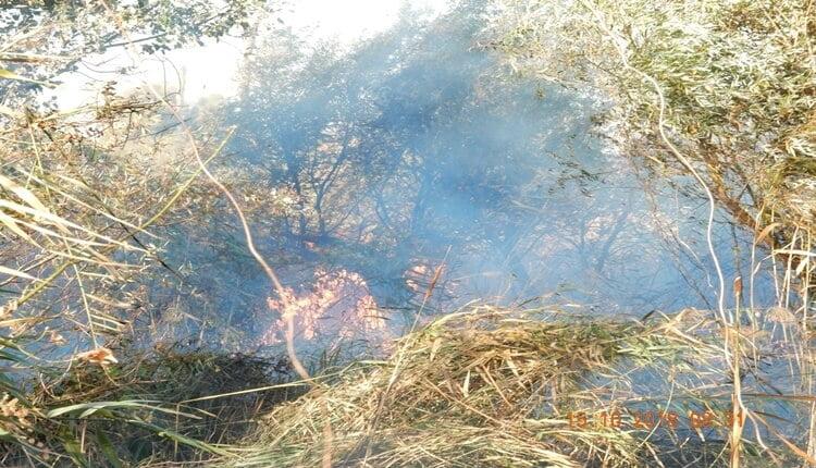 Požar na Carskoj Bari - 15. okt 2018
