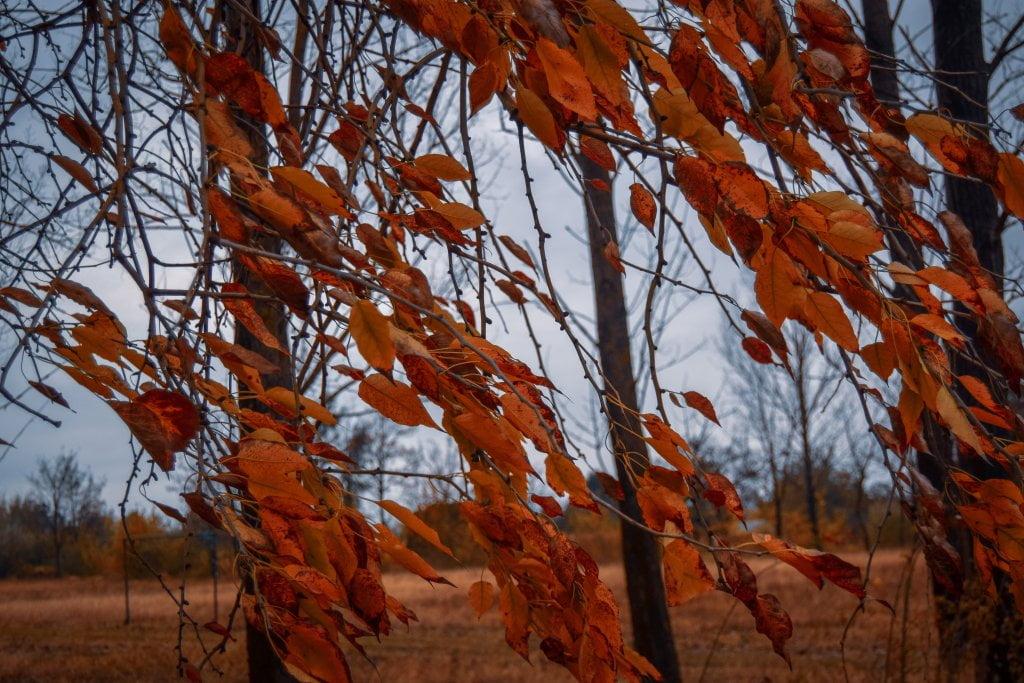 Jak vetar i boje jeseni - 20. novembar
