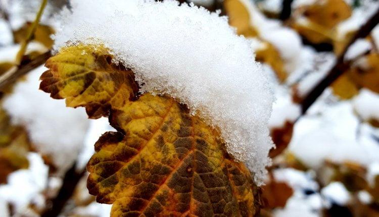 Snežna idila u Itebeju (3) - 28. novembar