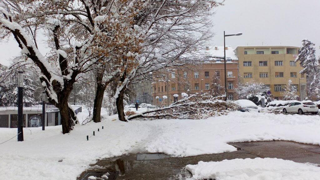 Česta scena danas u Vojvodini - oboreno stablo u Novom Sadu