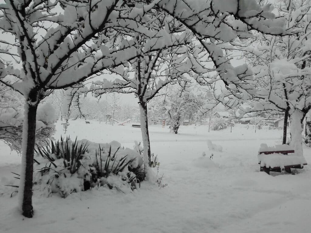 Snežno jutro u Rumenki