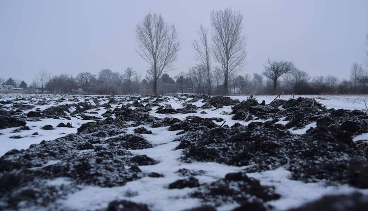 Snežnog pokrivača sve je manje u Vojvodini