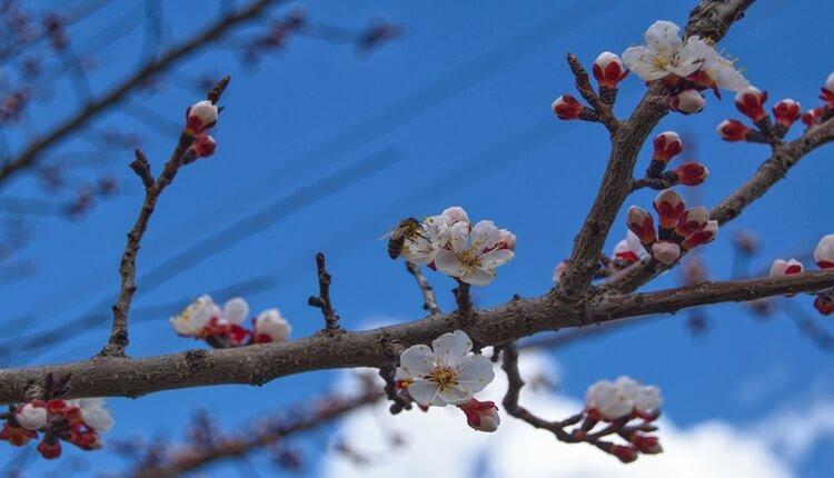 Vesnici proleća - 14. mart (Foto: Daliborka Popov)