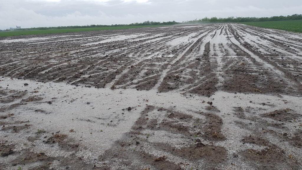 Posledice obilnih padavina i grada na njivama u okolini Jaše