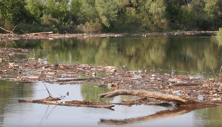 Ekoloska katastrofa na Tamisu