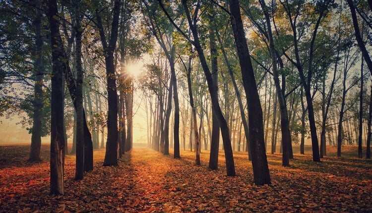 Jesen u šumama Vojvodine (Foto: Vladislav Tot)