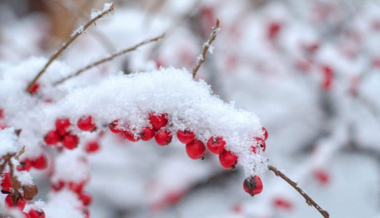 Januarski sneg u Vrbasu